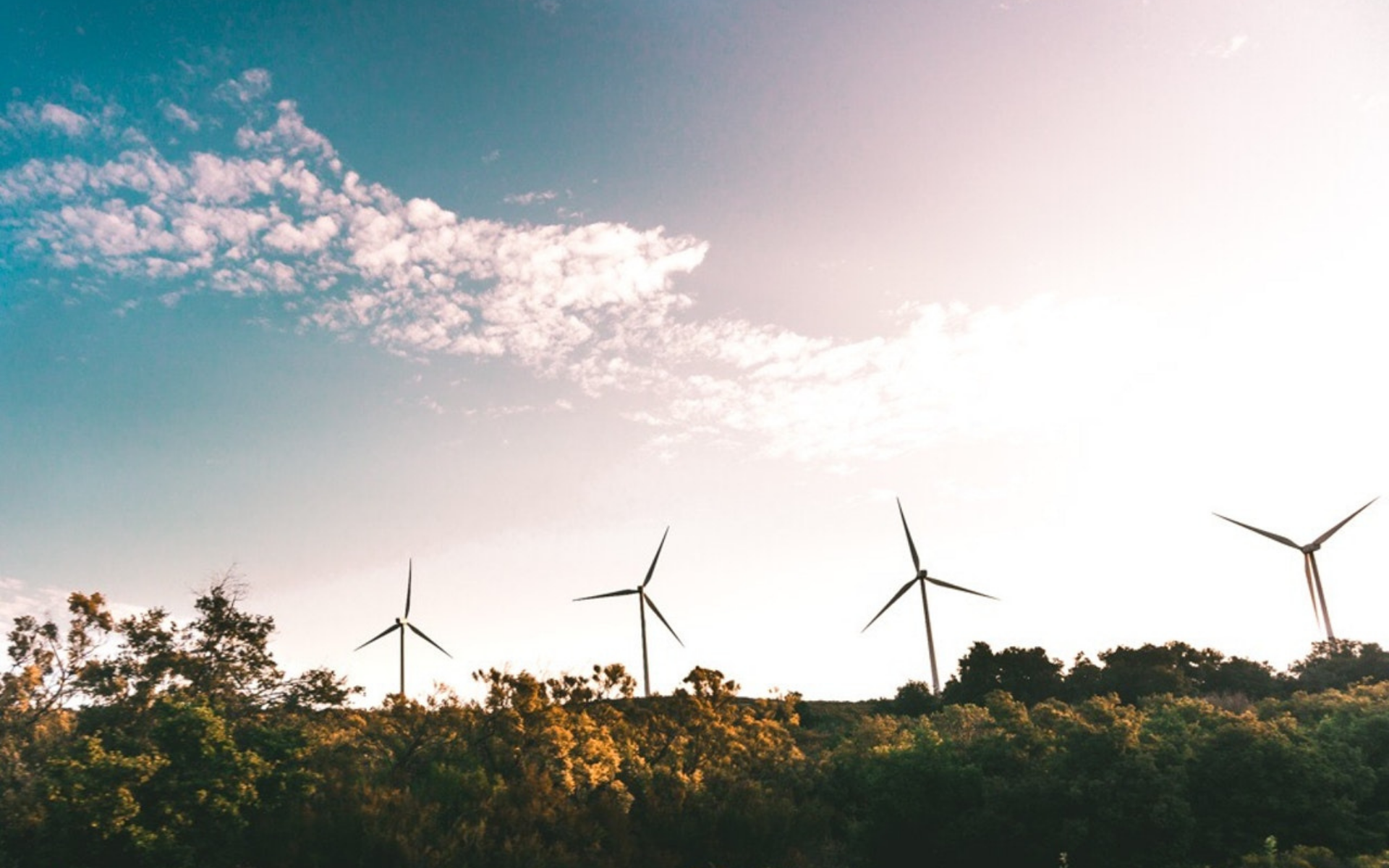 Wind turbines in bushland_Pexels